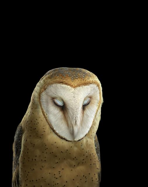 , 'Barn Owl #3, St. Louis MO,' 2012, photo-eye Gallery