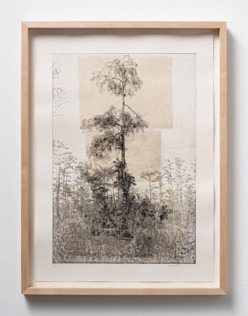 , 'Cypress Tree I,' 2019, Litvak Contemporary