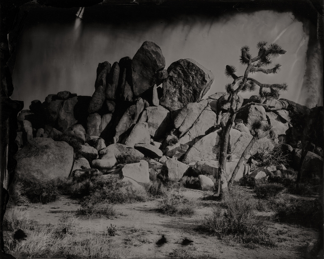 , 'Rock with Joshua Tree #1,' 2016, Modern West Fine Art