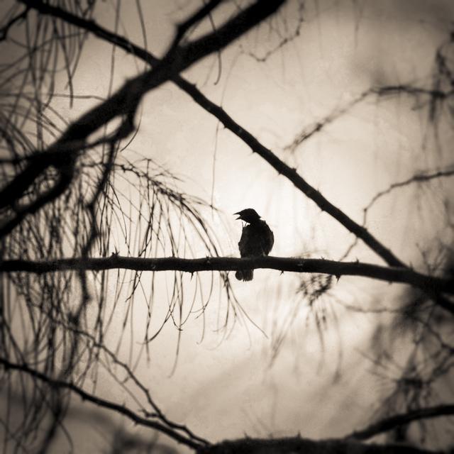 , 'Beak of the Finch,' 2015, Etherton Gallery