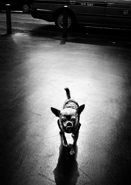 , 'Tokyo, Japan. ,' 2007, Magnum Photos