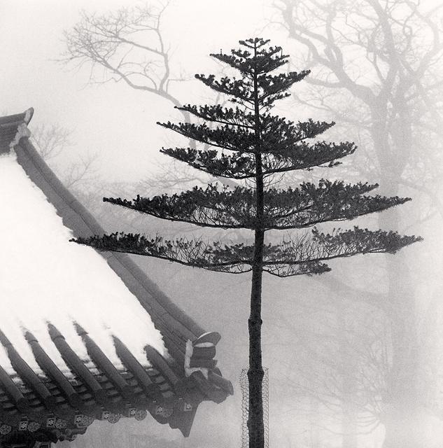 Michael Kenna, 'Temple Tree, Jonjaamji, Jeju Island, South Korea', 2012, photo-eye Gallery