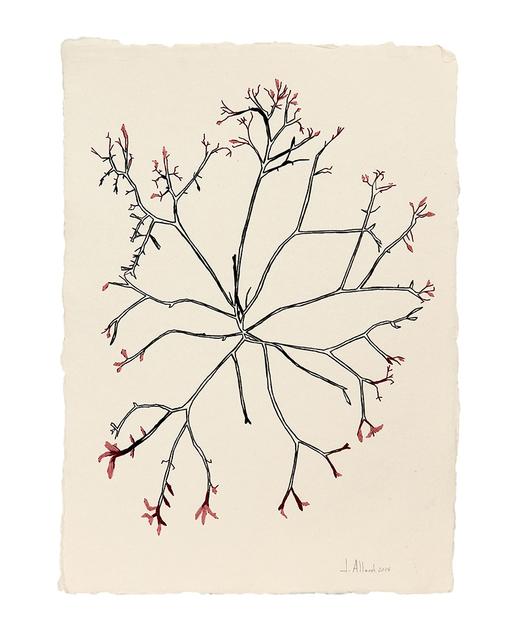 , 'Seaweed,' 2014, Artscoops