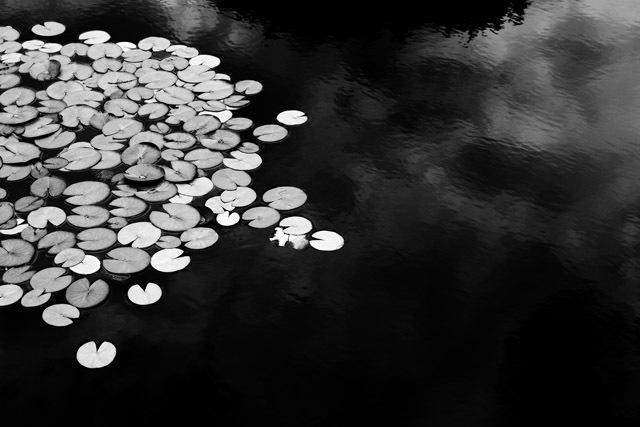 , 'Dusk Lilies,' 2006, Carrie Haddad Gallery