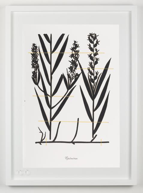 , 'Expedición extinción (Epidendrum),' 2018, Fernando Pradilla/El Museo