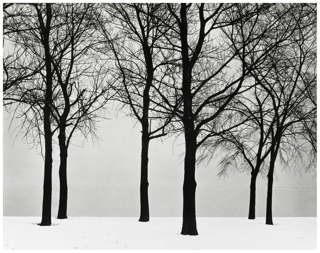 Harry Callahan, 'Chicago, Trees in Snow', 1950, Jackson Fine Art