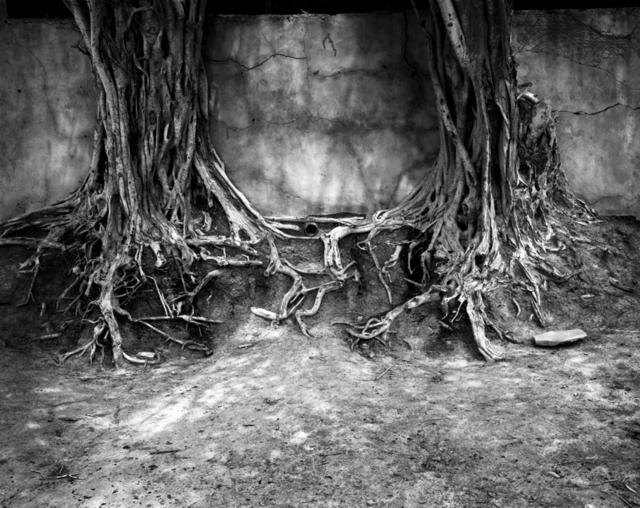 Ian van Coller, 'Roots', 1998, jdc Fine Art