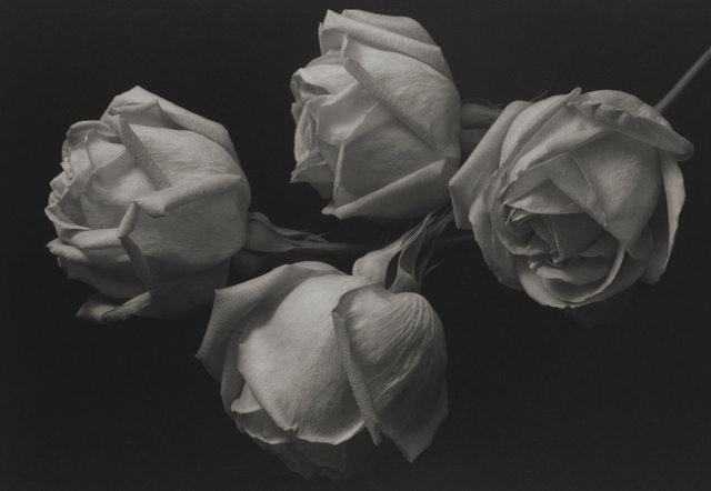 , 'Still Life #400,' 1993, Photography West Gallery