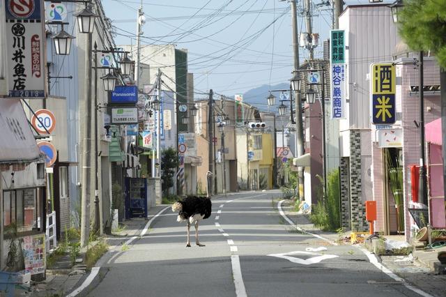 , 'Deserted Town ,' 2011, Japan Society