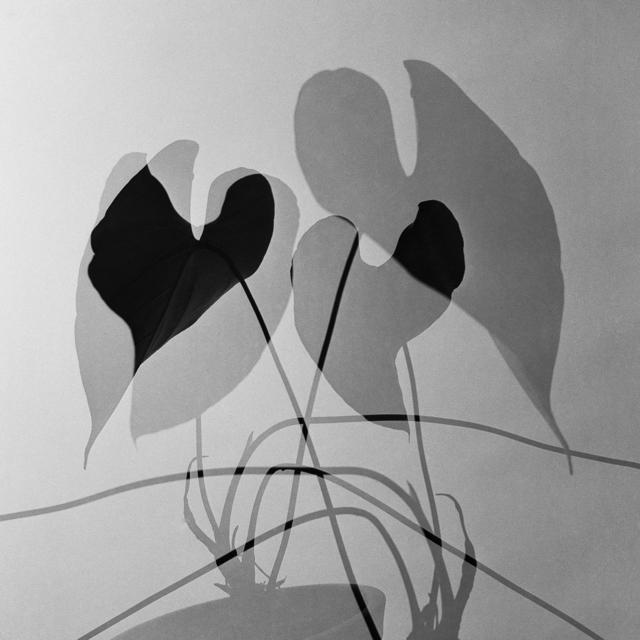 , 'Anthurium, 1960,' year print 1970s, Utópica