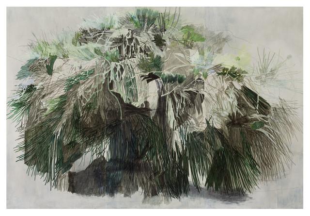 , 'A Tree in Jordan Valley Park, Main Entrance ,' 2014, Galerie Ora-Ora