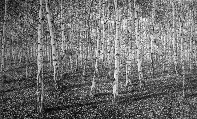 , 'Silver Birch Forest ,' , Rebecca Hossack Art Gallery
