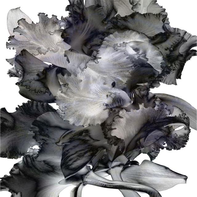 , 'Orchidotica 25,' 2015, J GO Gallery