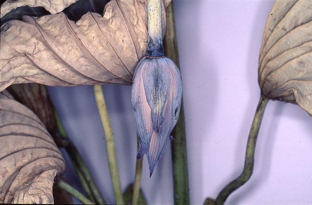 ", '""Flower Rondeau"", 1997/2020,' Printed 2019, Michael Hoppen Gallery"