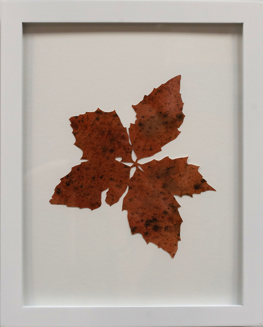 Hannah Cole, 'Untitled Red Weed', 2018, Tracey Morgan Gallery