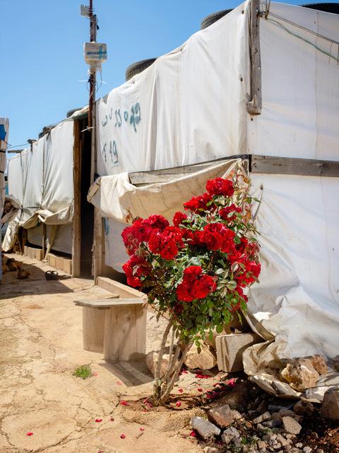 , 'Spray Rose, Terbol, Lebanon,' 2018, Galerie Bart