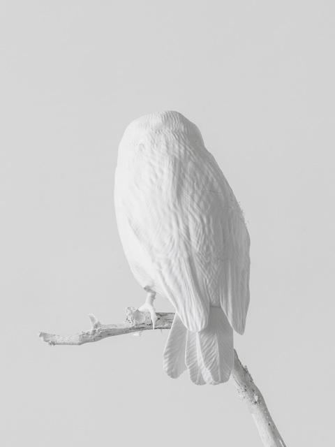 Axel Antas, 'Lost to Sight (Sceloglaux albifacies - back)', 2019, Galleria Heino