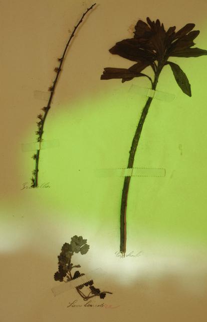 Bernard Voïta, 'Herbier populaire III', 2017, Galerie Laurence Bernard