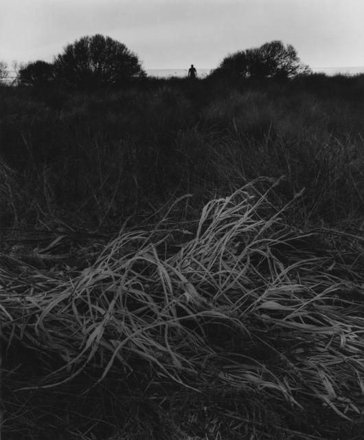 , 'Untitled (grasses),' 1966, Charles A. Hartman Fine Art
