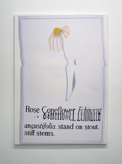 , 'Rose Coneflower,' 2015, UNION Gallery