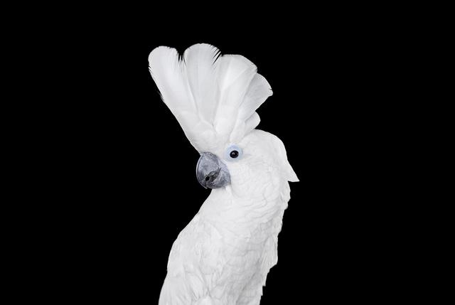 , 'White Cockatoo #1, Albuquerque, NM, 2016,' 2016, Artistics