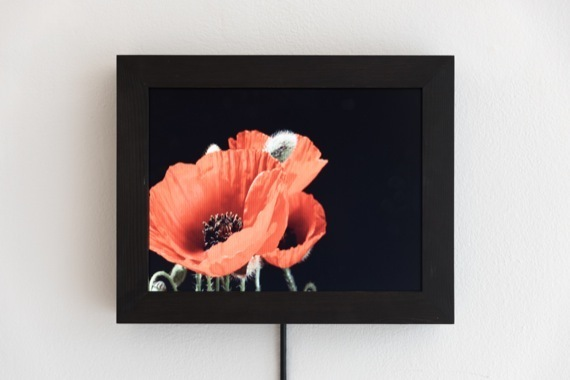 Eva Koch, 'Red Poppy #1', 2015, Martin Asbæk Gallery