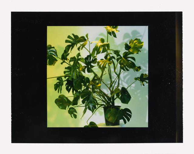 , 'House Plant - Study,' 2006, Huxley-Parlour