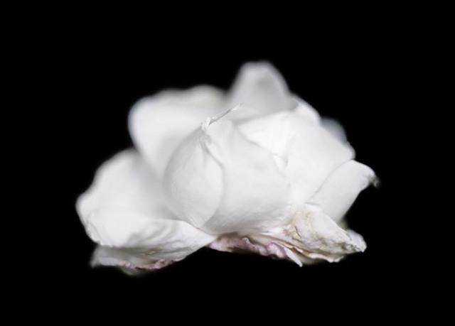 , 'Flower,' 2013, Barbara Frigerio Contemporary