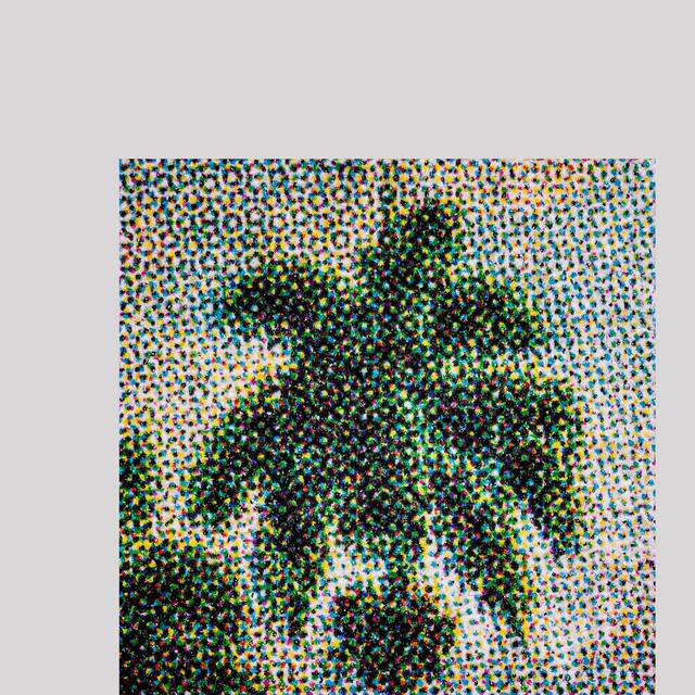 , 'Royostonea Regia No. 10,' 2015, Erin Cluley Gallery