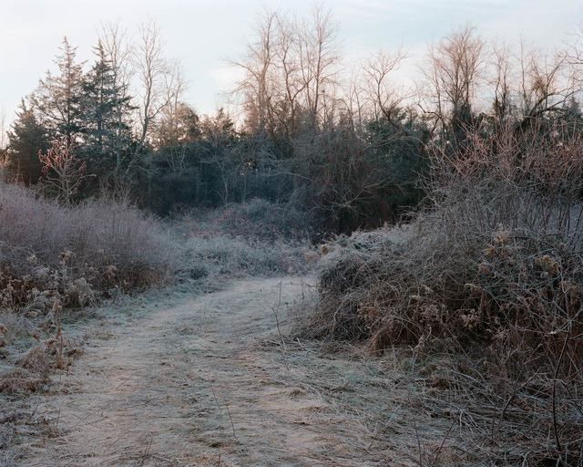 , 'Winter Path, Livingston, New York, 2016,' 2016, Tracey Morgan Gallery