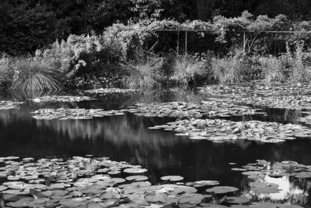 , 'Shadow and Light #3,' , Soho Photo Gallery