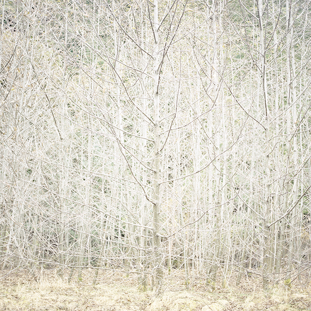 , 'Wilderness 06402-8-10,' 2014, Julie Nester Gallery