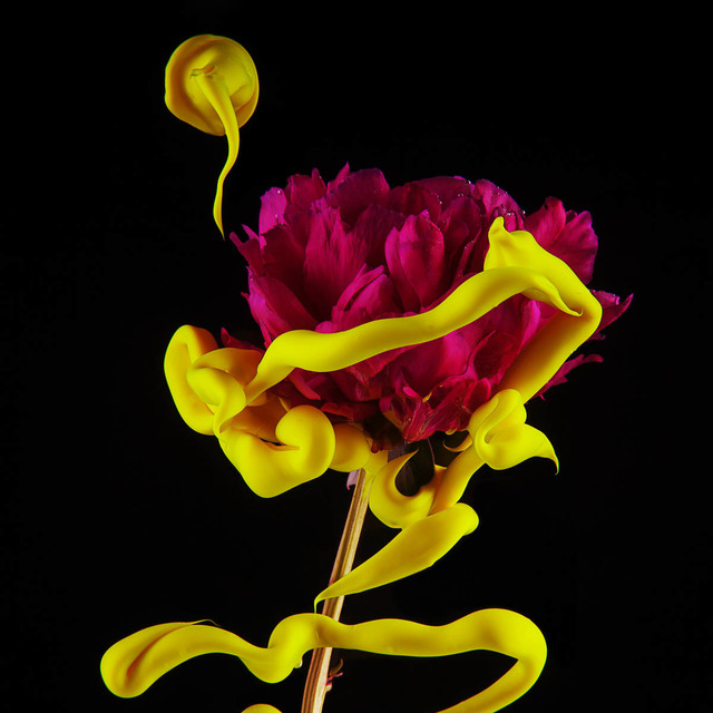 , 'Peony,' 2014, Carrie Haddad Gallery