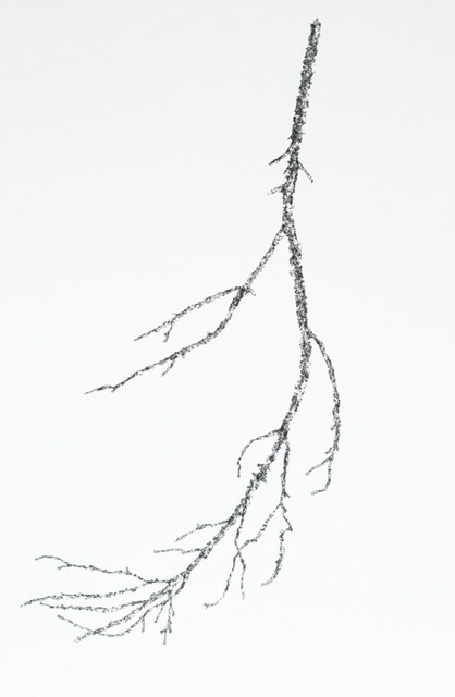 John Adelman, '14,354 Bits of Bark From a Tree', 2019, Wally Workman Gallery