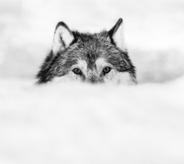David Yarrow, 'Encroachment', Photography, Visions West Contemporary