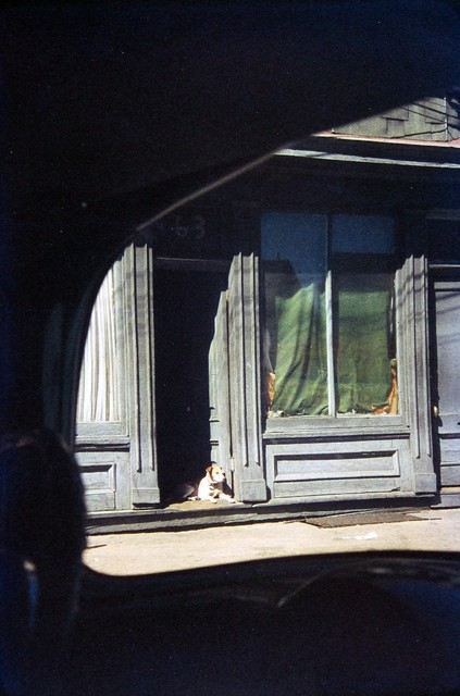 Saul Leiter, 'Dog in Doorway, Paterson', 1952, Photography, Chromogenic print; printed later, Howard Greenberg Gallery