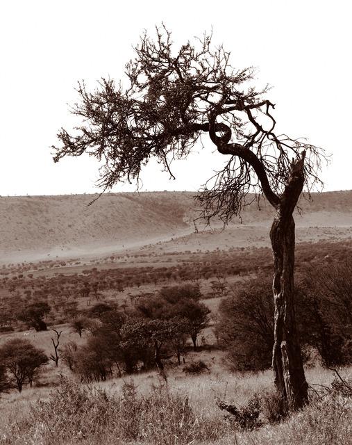 , 'Serengeti Tree #4,' 2014, Cross Mackenzie Gallery