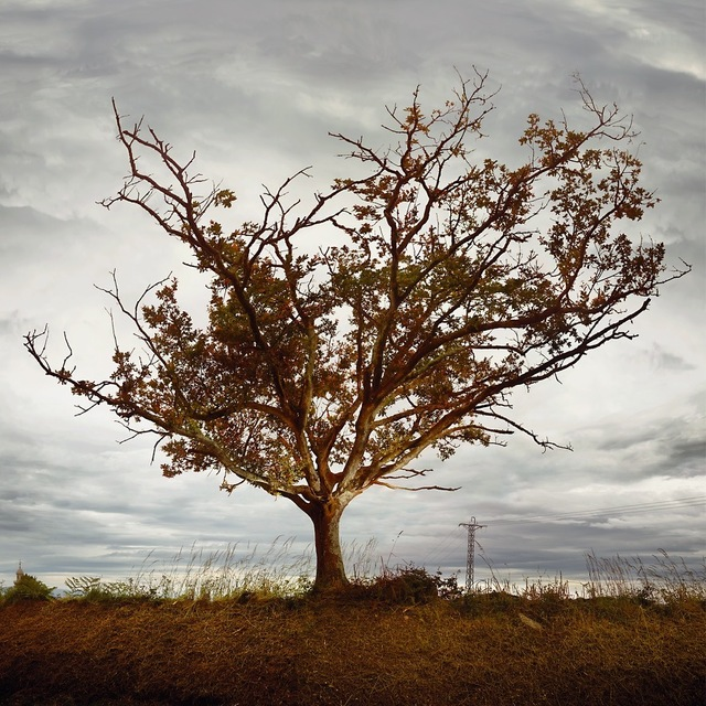 Ellen Kooi, 'Galicie – eik (oak)', 2019, Photography, Hahnemühle Fine Art Photo Rag print, inner mat, wooden frame, Galerie Les filles du calvaire