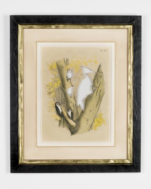 , 'RIP Ivory-Billed Woodpecker: After Theodore Jasper,' 1881/2015, Goya Contemporary/Goya-Girl Press