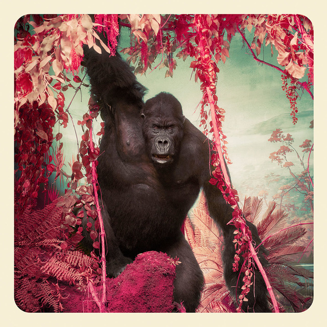 , 'The Gorilla,' 2017, KLOMPCHING GALLERY