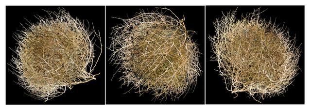 , 'Tumbleweed Triptych,' 2015, J GO Gallery