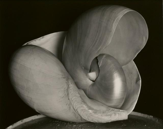 , 'Two Shells,' 1927, Edwynn Houk Gallery