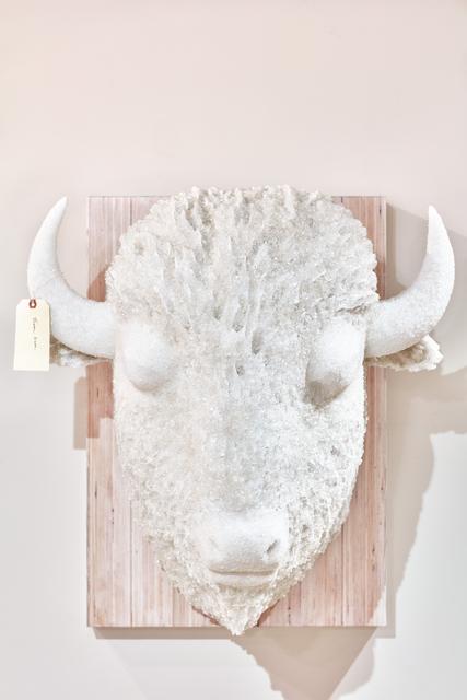 , 'Buffalo #2,' 2017, Mark Moore Fine Art
