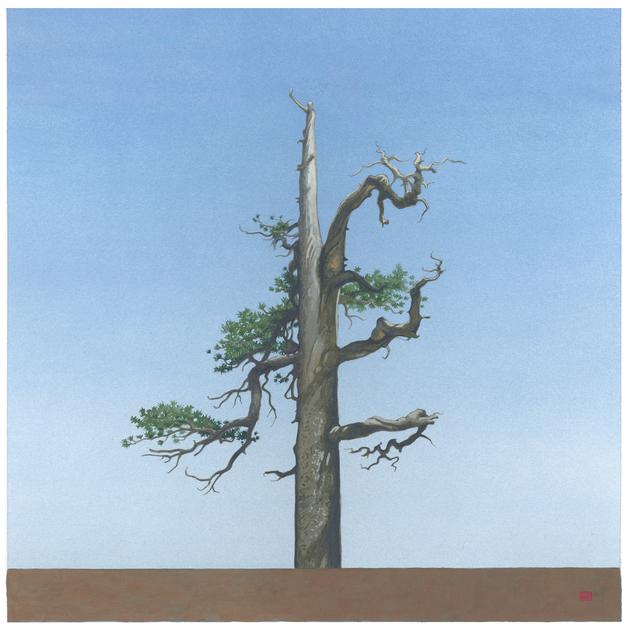 , 'Throop Tree [N34*21.178+w117*47.957,' 2013, LAUNCH LA