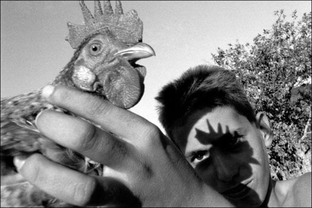 , 'Viñales, Cuba,' 2003, The Photographers' Gallery   Print Sales