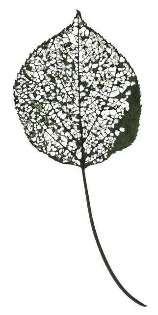 , 'Untitled Leaf - Number 115 (White),' 2018, Carrie Haddad Gallery