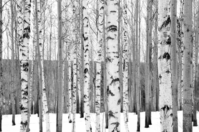 , 'Forests (Listvyanka, Siberia, Russia),' 2013, Pushkin House