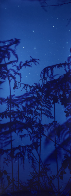 , 'Star Field Bracken,' 2003, Danziger Gallery