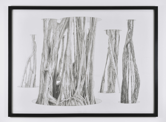 , 'Banyan Tree in Holes,' 2011, PRAZ-DELAVALLADE