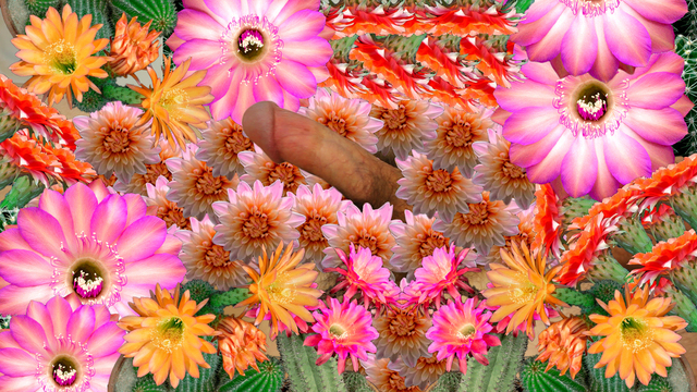 Faith Holland, 'Blooming', 2017, Video/Film/Animation, Animated GIF, TRANSFER